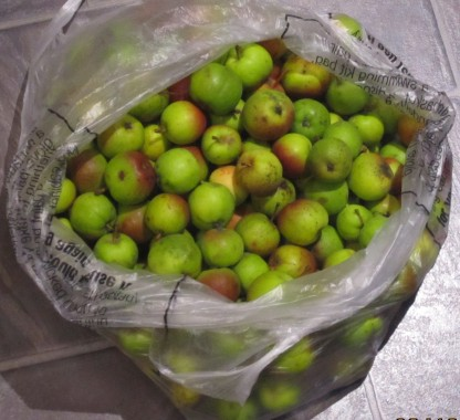 Crab apple glut