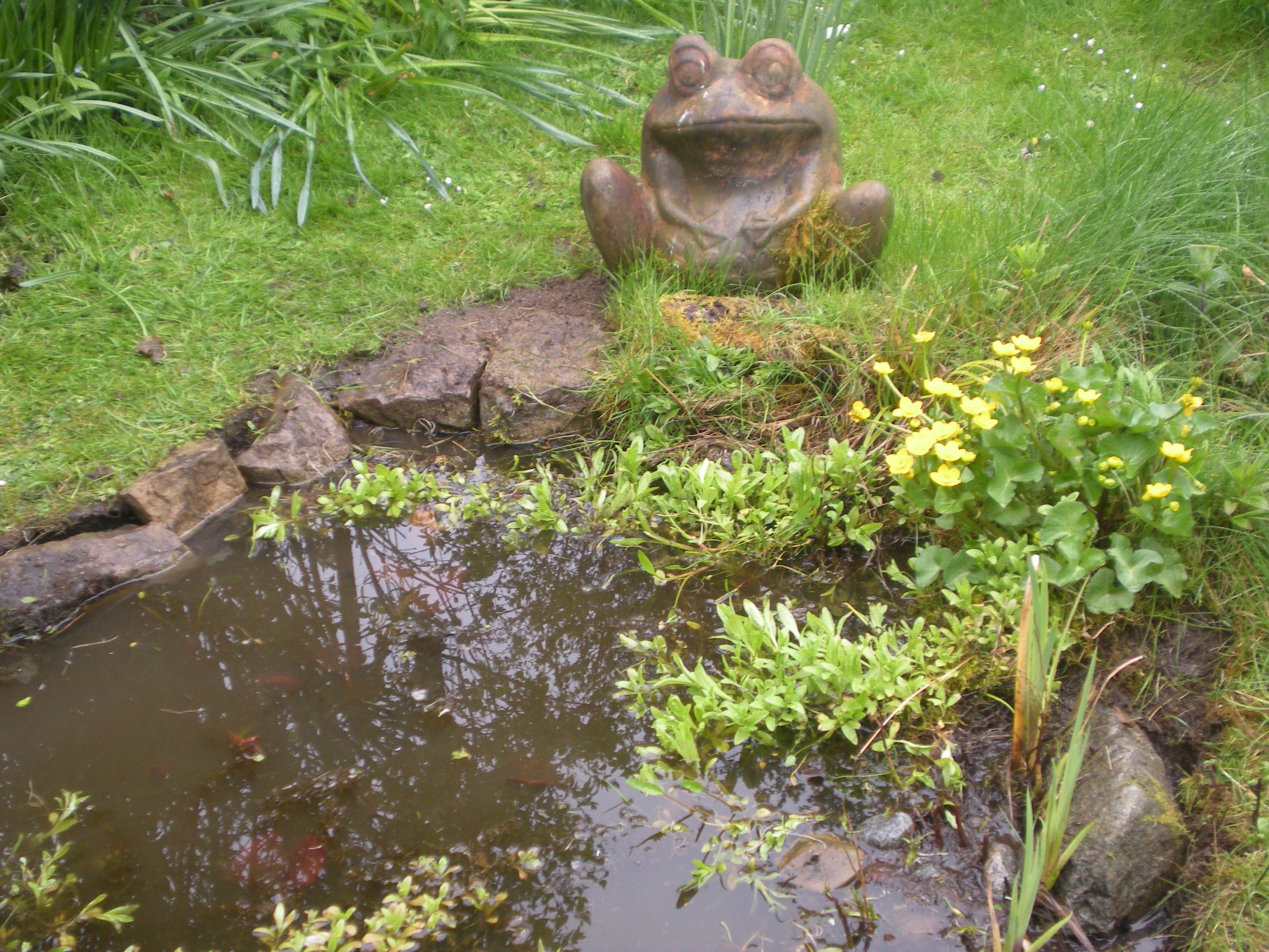 Fairy mounds reclaiming paradise for Fish pond preparation