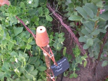 Peas, Botanic Gardens
