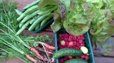 New vegetables