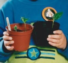 Loquat seedlings 2002